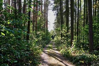 Freudenberger Heide