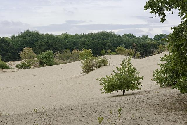 Dunes à Duinpanne