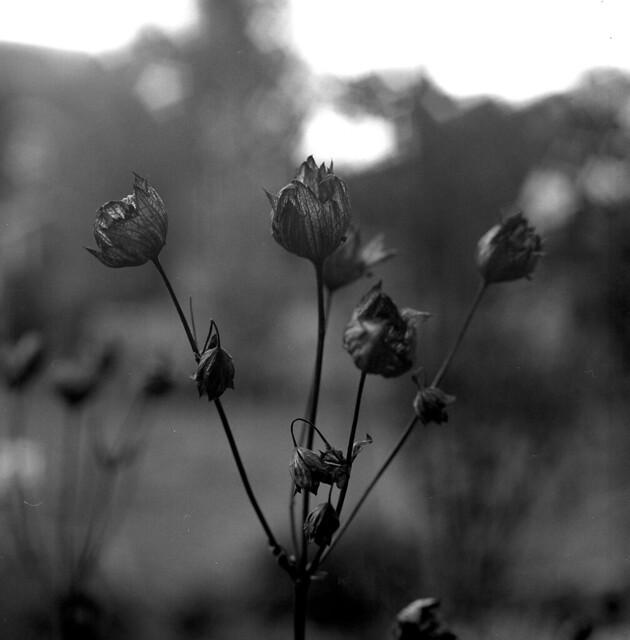 garden tristesse 3