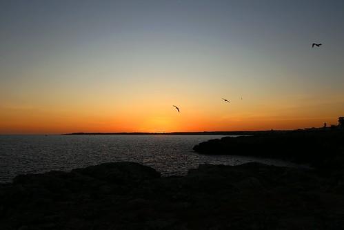 mallorca sarapita canon canoneos eos6d sigma sigma35mm sunset puestadesol atardecer landscape seascape paisaje sea mar gaviota seagull