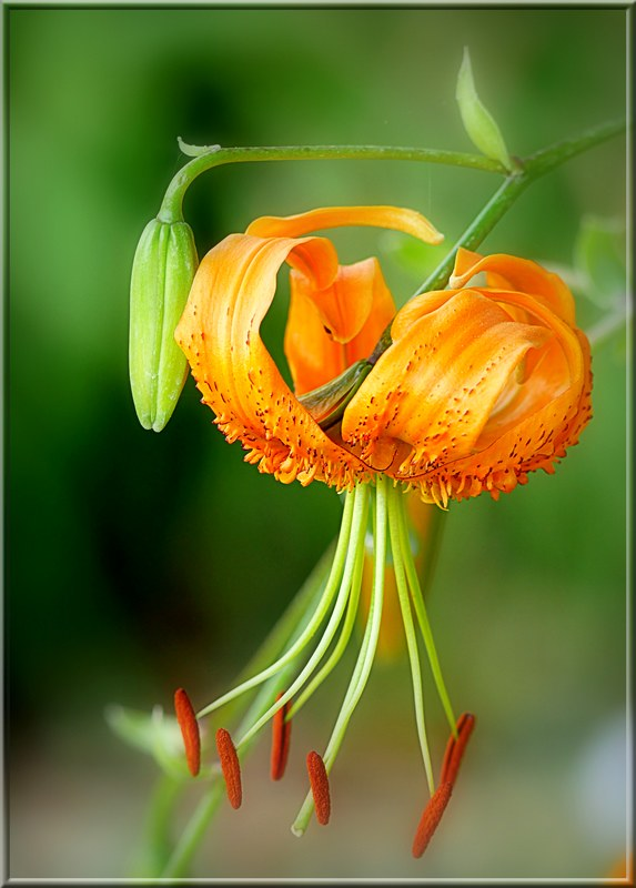Au jardin des plantes. - Page 5 48800573033_3ef11cc4c0_c