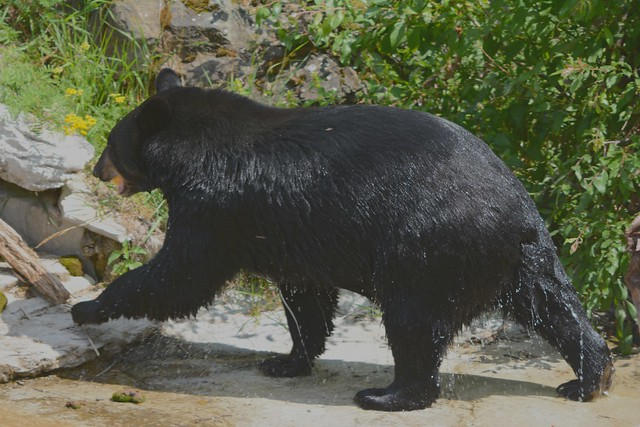 [```] Bear Bath Exit [```]