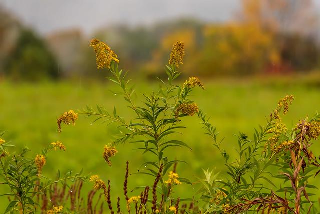 Rainy field