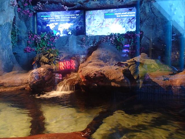 Ripley's Aquarium Of Myrtle Beach - South, Carolina (3)