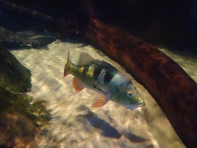 Ripley's Aquarium Of Myrtle Beach - South, Carolina (1)