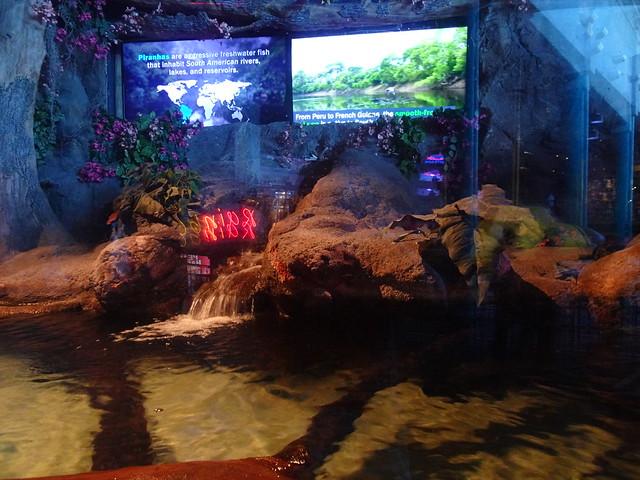 Ripley's Aquarium Of Myrtle Beach - South, Carolina (2)