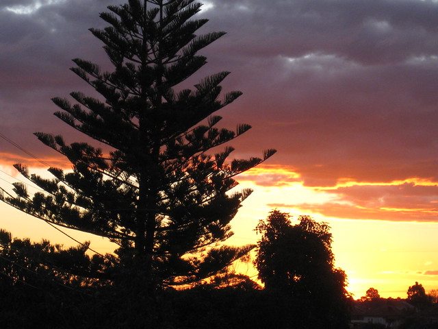 Suburban Silhouette Sunset