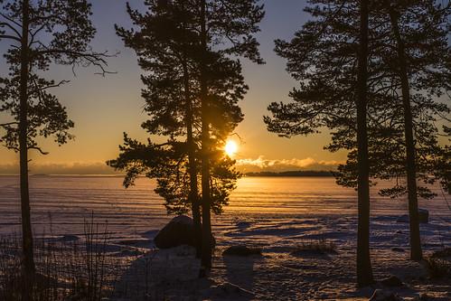 canon6d landscape sunrise sun frozensea nature outdoors outside trees espoo finland