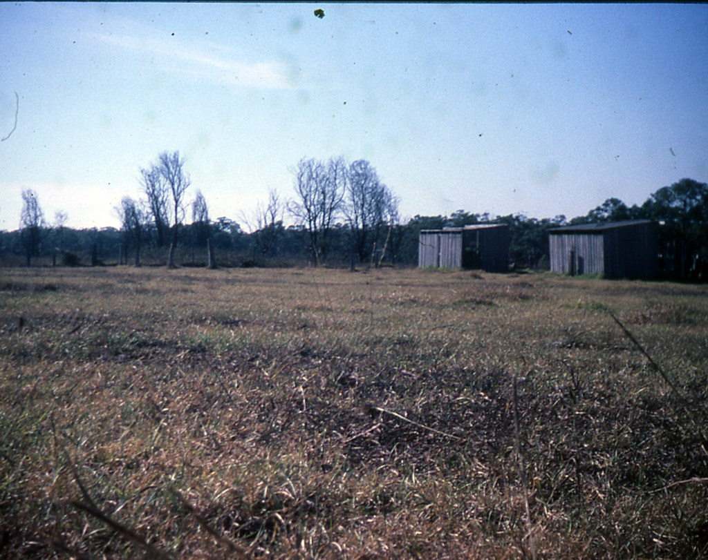 Old pig sheds on Dan and Pauline Clearys property.