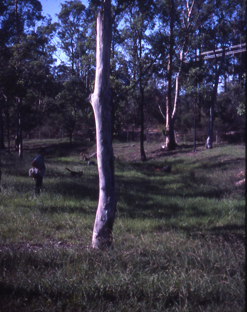 Dan Cleary with dog at the creek area of his property.