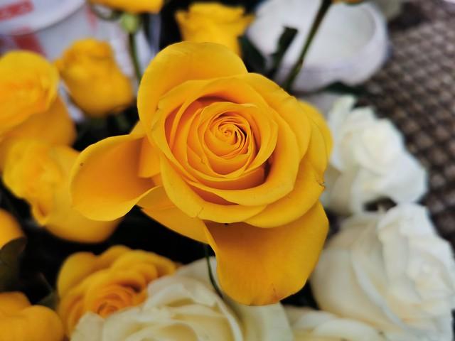 Yellow perfection