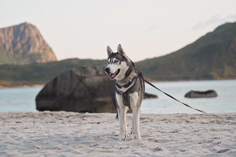 norjassa haukland beach
