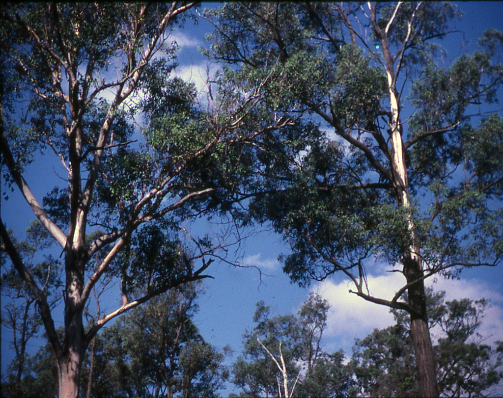 Trees at the creek area of Cleary property