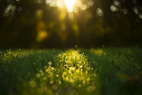 friday tgif weekend morning goodmorning happy camp camping dawn sunrise bokeh detail beautiful nature landscape peaceful grass home canon 2019 fall autumn september