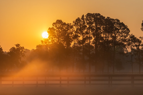 sunrise nikon d800 golden fog trees nikond800 adobe lightroom aiken southcarolina south carolina southern