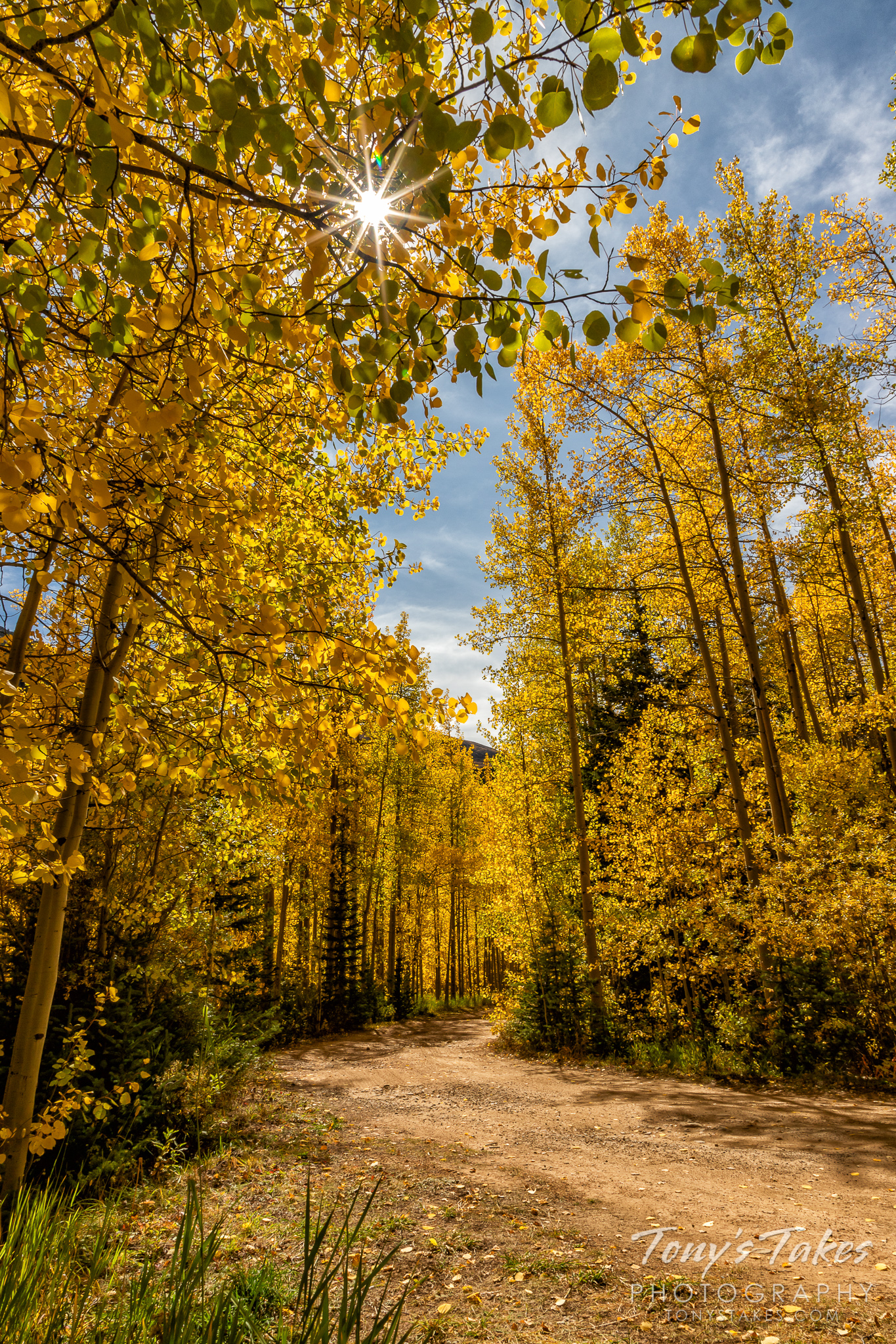 The sun shines through the golden leaves of aspen trees in Colorado. (© Tony's Takes)