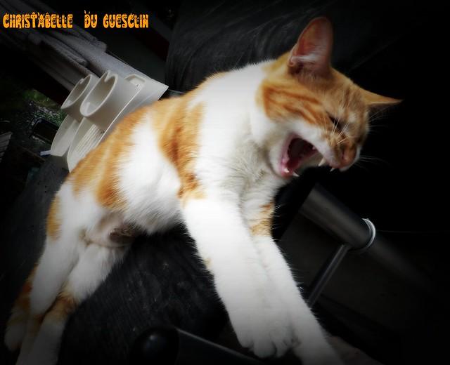 On ne réveille pas une chatte qui dort