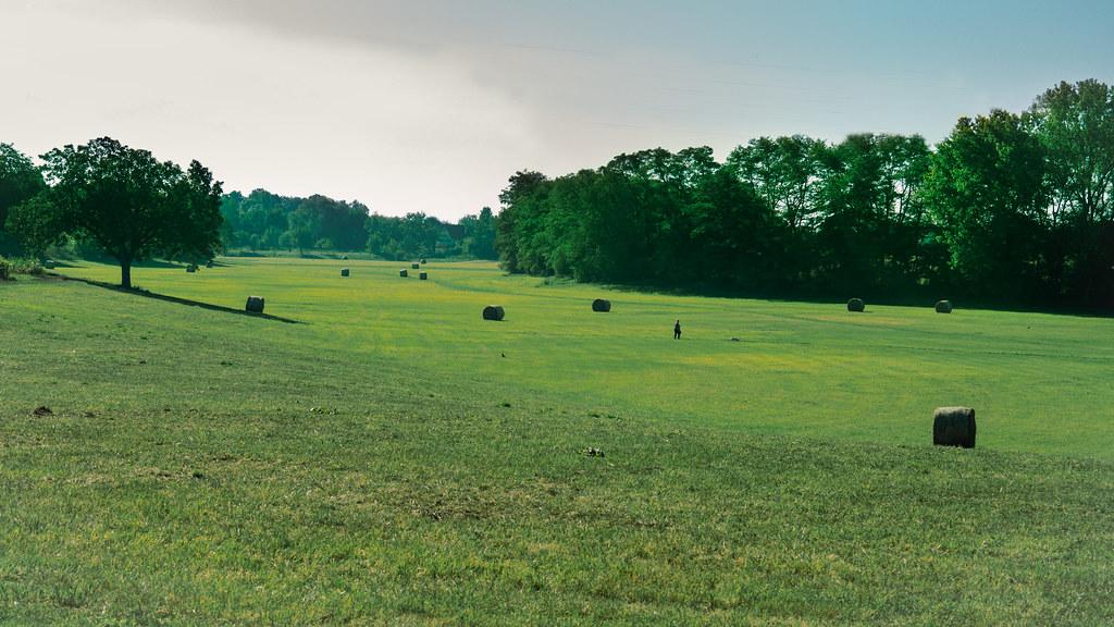 Dans les champs... nouvelle version. +NB 48804210466_467a0e187a_b
