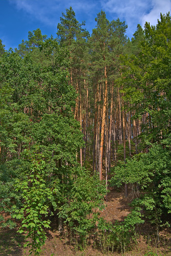 deutschland rudolstadt landschaft wald trees thüringen woods thuringia darktable