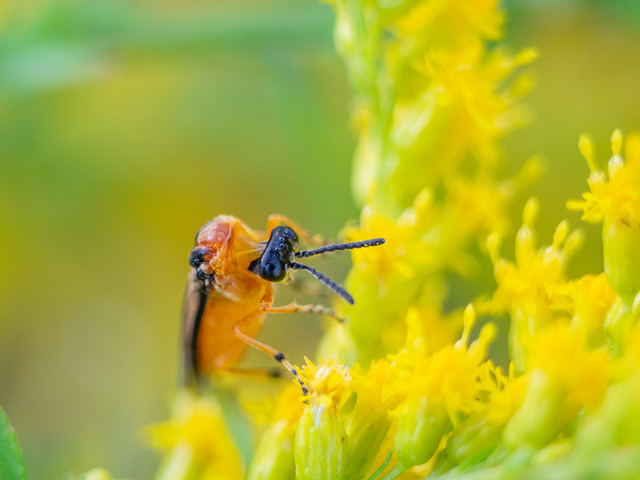 Some small insect feels comfortable with yellow