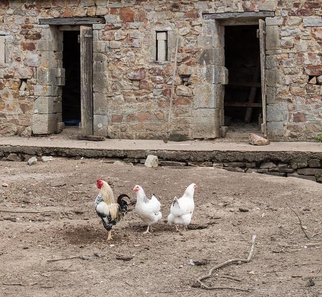 Polygamie au château de Crosville-sur-Douve (Manche, France)