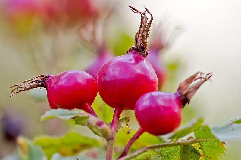 Samll-berries-25-7D1-091919