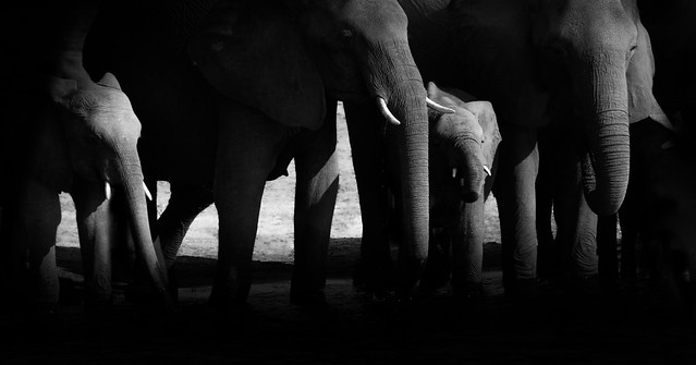 A Memory of Elephants