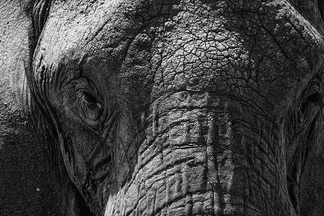KENYA: EYE OF THE ELEPHANT