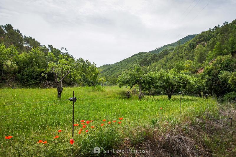 Horts de Can Serra junto al camino de Coaner