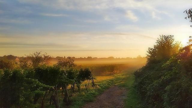 Les brumes matinales de septembre
