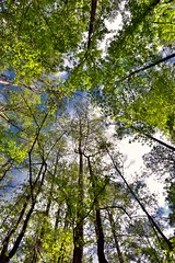 A Reason to Recharge is All Around Us in the Wildness of Nature! (Congaree National Park)