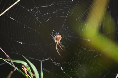 Canalside spider
