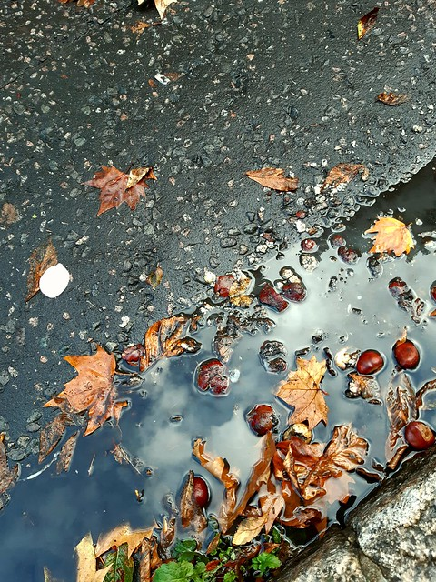 Slow death of summer : blown rose petal with conkers (Explored).