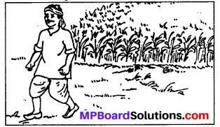 MP Board Class 6th Sanskrit Solutions Chapter 9 उज्जयिनीदर्शनम् 4
