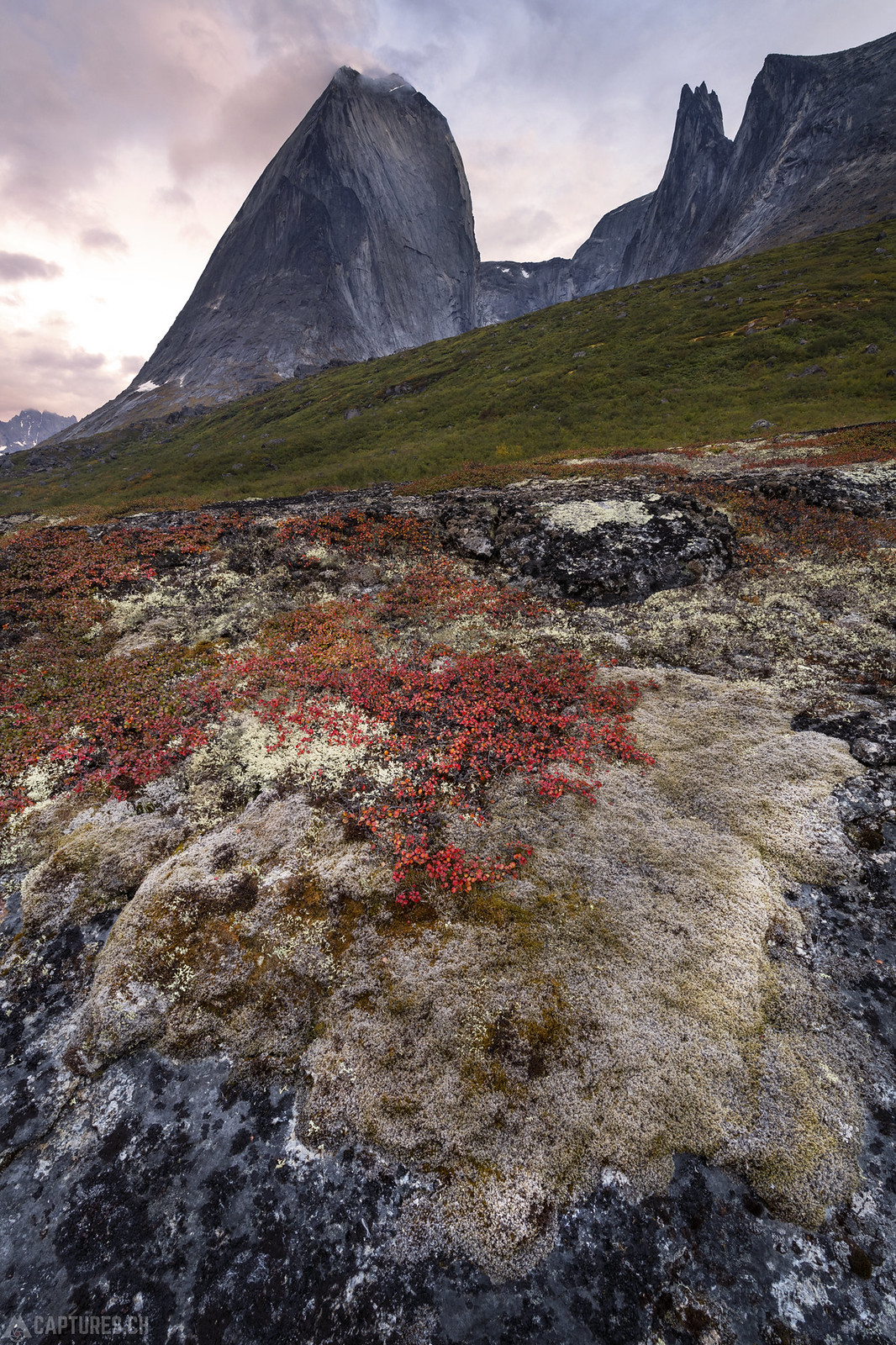Colored moss - Tasermiut