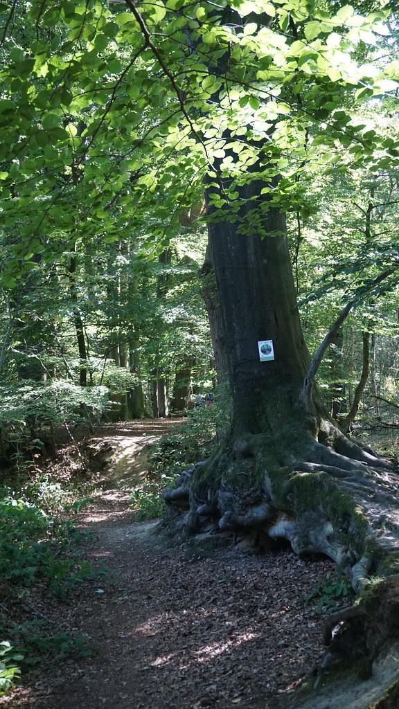 Tour 1017 - Wegberg-Wildenrath - Traumweg Wildes ...