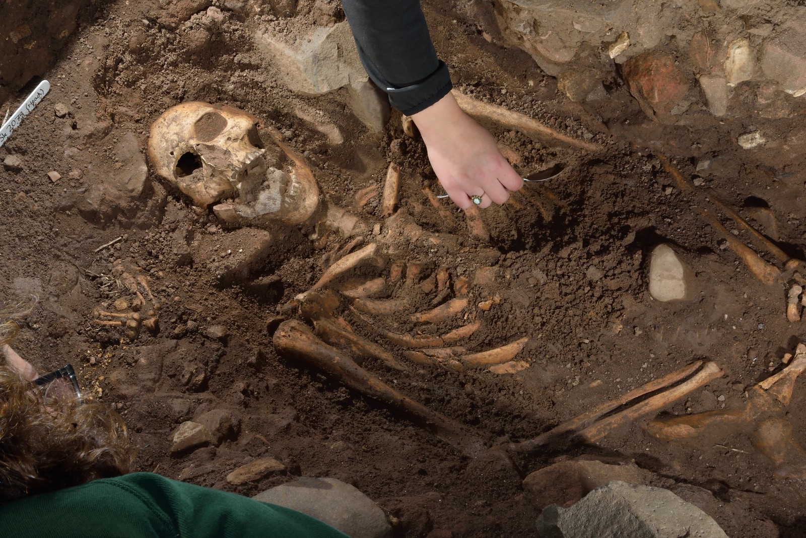 Skeleton in the ground that is in the process of being excavated