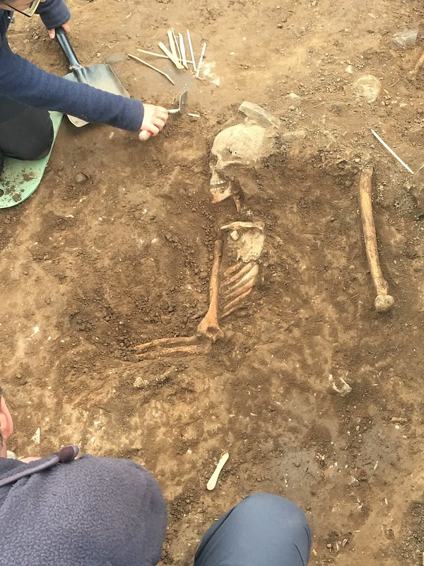 A skeleton that has been partially excavated such that the skull, ribs and some long bones have been revealed. A person is in the process of excavating it