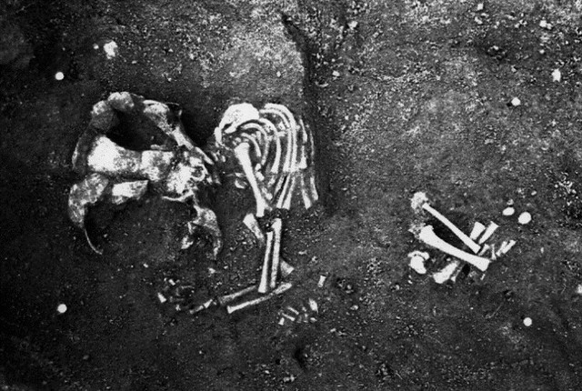 An infant skeleton in situ in the soil at a Roman site. There is damage to the skeleton due to a whole that has cut through part of the lower half of it
