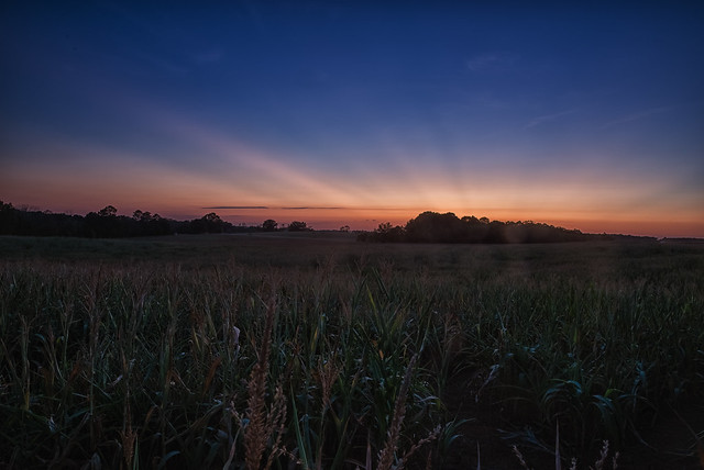 Field After Sunset