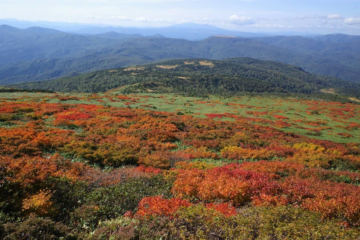 乳頭山から眺める紅葉と田代平