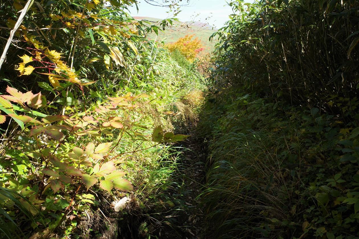 秋田駒ヶ岳~乳頭山縦走 藪漕ぎの登山道