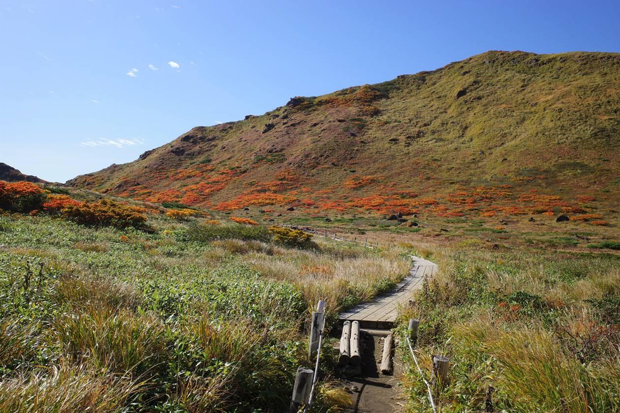 秋田駒ヶ岳 木道の登山道