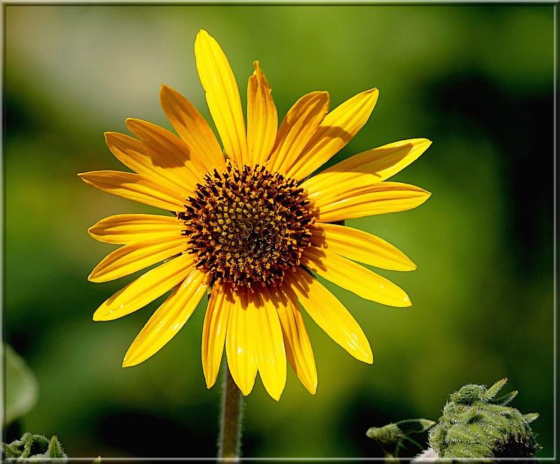 Au jardin des plantes. - Page 6 48808029017_8e95db809b_c