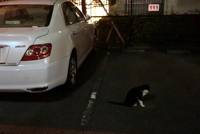Today's Cat@2019-09-28