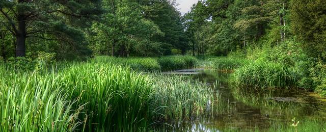 Pond Watching