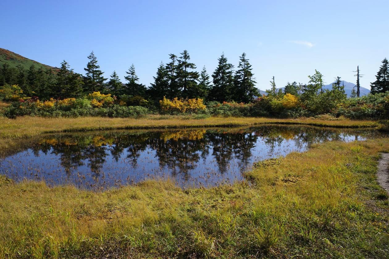田代平の湿原