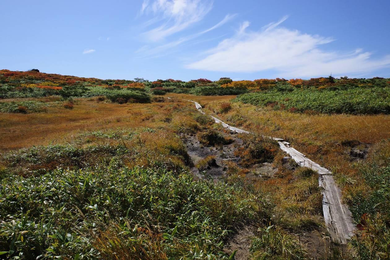秋田駒ヶ岳~乳頭山縦走登山 湿原の草紅葉と木道