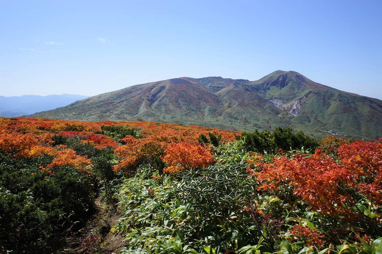 紅葉と秋田駒ヶ岳
