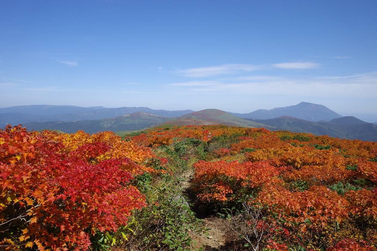 紅葉の秋田駒ヶ岳 横岳から焼森へ